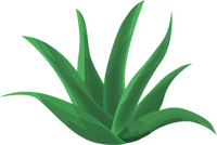 Aloes-Do-Picia.pl